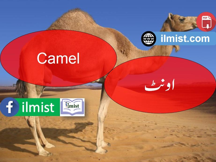Eid Ul Adha Vocabulary PDF