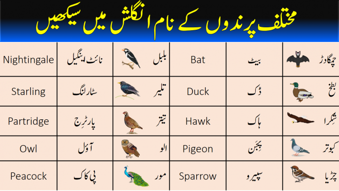 Birds Names with Urdu and Hindi Meanings