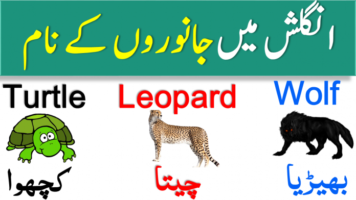 Animal Names in English with Urdu Meanings