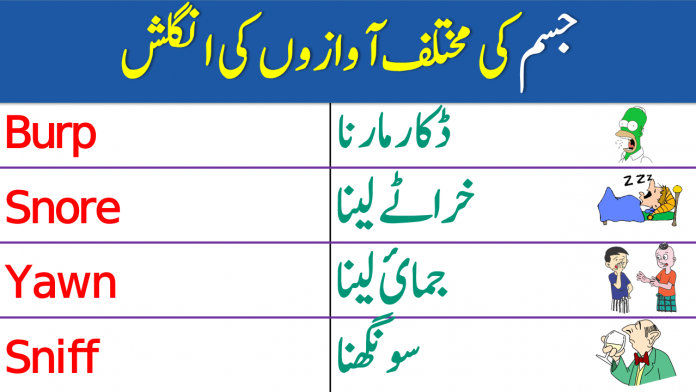 Body Sounds Vocabulary Words with Urdu Meanings