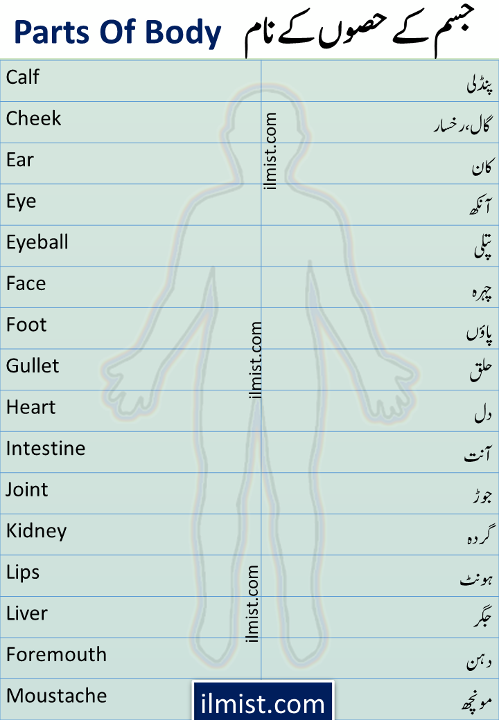 Parts Of Body Names In English To Urdu | Parts Of Body Vocabulary